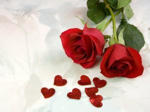 Red-Rose-156
